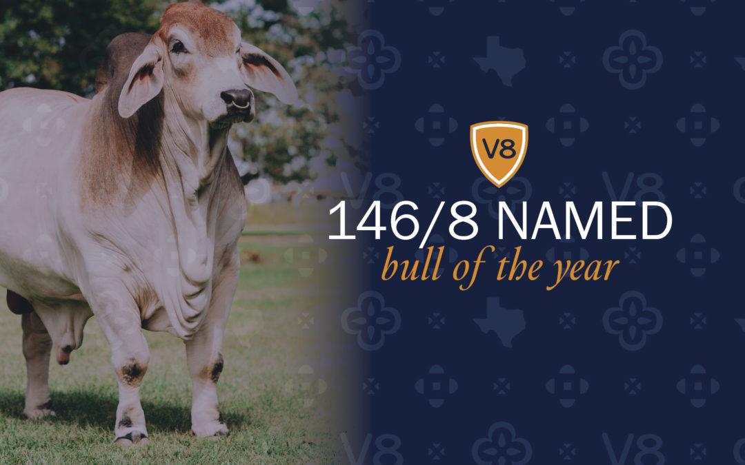 V8 Names Mr. V8 146/8 as Bull of the Year