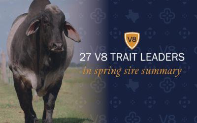 V8 Bulls Named Brahman Trait Leaders