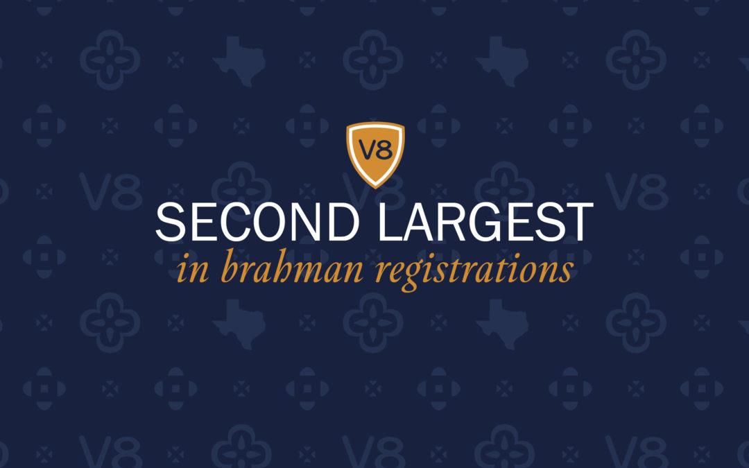V8 Ranks as Second Largest Brahman Breeder