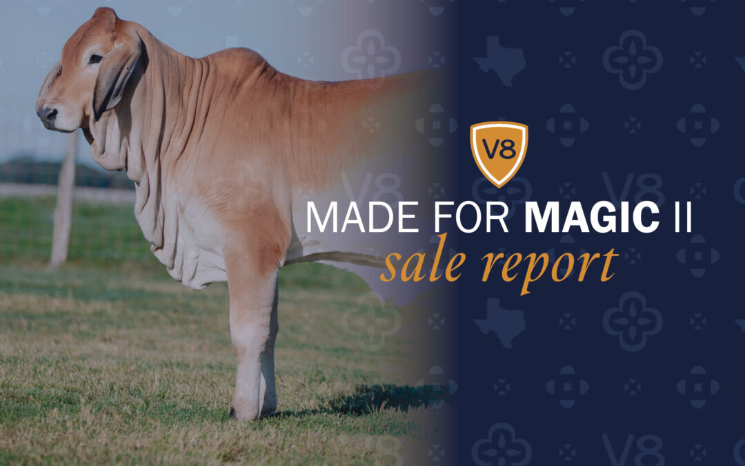 Brahman Breeders Bid Strong in V8's Made for Magic II Sale