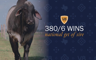 +Mr. V8 380/6 wins National Get-of-Sire Title for the Third Time