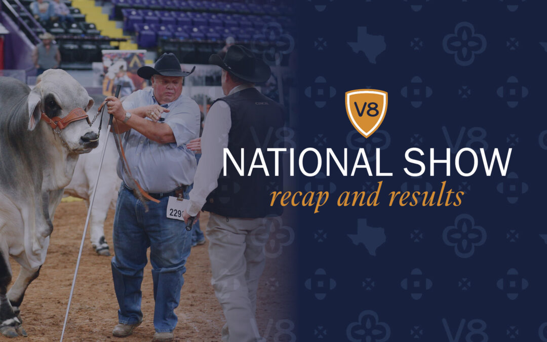 V8 Claims Highest Honors at National Brahman Show