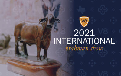 Making Plans for the 2021 International Brahman Show