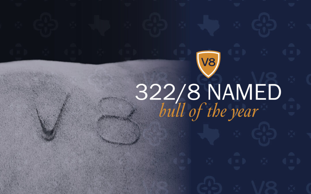 V8 Names Mr. V8 322/8 Bull of the Year