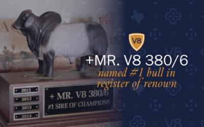 +Mr. V8 380/6 Named #1 Bull in ABBA Register of Renown