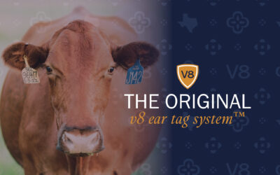 Need Ear Tags for Cattle? Tag Along with The Original V8 Ear Tag System™